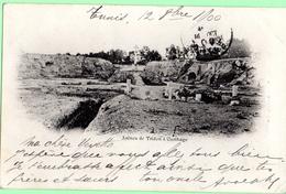 D2101 - Arènes De Tridon à Carthage - Tunisia