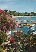 83  ?  REFLETS DE LA COTE D'AZUR---petit Port Fleuri---voir 2 Scans - France