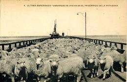 ARGENTINA - ULTIMA ESPERANZA - EMBARQUE DE OVEJAS EN LE FRIGORIFICO DE LA PATAGONIA Arg64 - Argentina