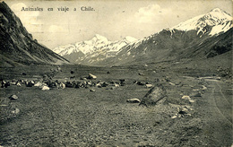 ARGENTINA - ANIMALES EN VIAJE A CHILE 1911 Arg80 - Argentina