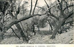 ARGENTINA - THE FOREST PRIMEVAL IN CORDOBA  Arg86 - Argentina