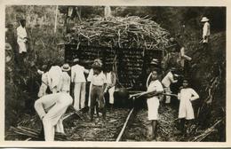 GUADELOUPE(CANNE A SUCRE) - Guadeloupe