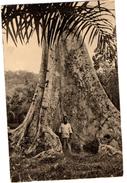 CONGO Baobab? - Congo Francese - Altri