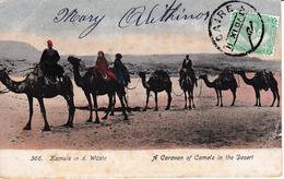 Carte Postale Egypte LE CAIRE Egypt Chameau Camel Caravane Caravan Bergues - Égypte
