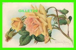 "FLEURS - CALIFORNIA ROSES - RÊVE D""OR - CIRCULÉE EN 1911 - DOS 3/4 - - Fleurs"