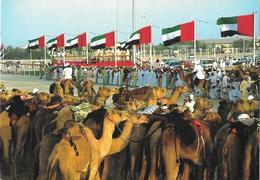 United Arab Emirates - National Folklore - Chameaux  - Camels - Emirats Arabes Unis
