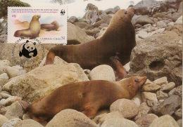 Chili - 1984 - N°Yv. 177 - Loups De Mer - Carte Maximum - WWF