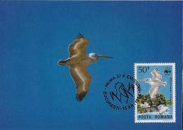 Roumanie / Romania - 1984 - N°Yv. 3543 - Pélicans - Carte Maximum - WWF