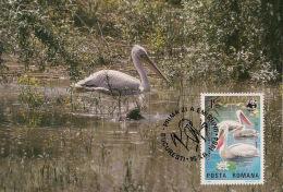 Roumanie / Romania - 1984 - N°Yv. 3544 - Pélicans - Carte Maximum - WWF