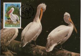 Roumanie / Romania - 1984 - N°Yv. 3545 - Pélicans - Carte Maximum - WWF