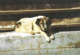 Chien - Hunde