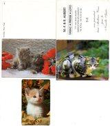 Kat Chat Cat Katze Poes Calendrier De Poche Zakkalender 3 Stuks Pcs Taschenkalender Calendar - Calendriers