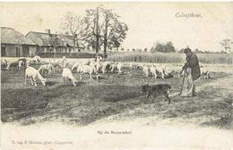 CALMPTHOUT - Op De Bessemhei - N. 849 F. Hoelen Phot. Cappellen - Kalmthout