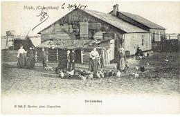 HEIDE - CALMPTHOUT - De Cambus - N. 549 F. Hoelen Phot. Cappellen - Kalmthout