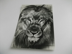 LEONE LION - Leoni