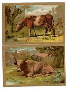 LOT 2 CHROMOS  - ANIMALIER - Vache, Boeuf - Animaux