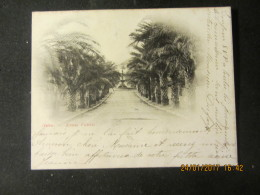 Cpa HYERES (83)  Format 9X11 Cm  1901 -  Avenue Victoria - Hyeres