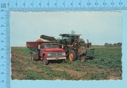 Aroostook County, Maine USA - Potato Harvester -  2 Scans - Cultures
