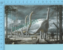 Dinosaure Dinosaur  , Nodosaur  - Description à L'arriere, Description At The Back  - 2 Scans - Animaux & Faune