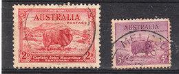 Australia   -   1937.  Pecore Merinos. Merino Sheep