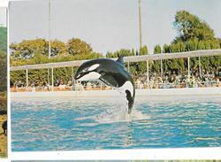 Cartoline Animali-orca-marineland Cote D'azur - Animali