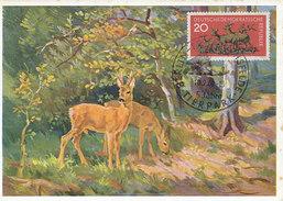 D28608 CARTE MAXIMUM CARD 1960 GERMANY DDR - BERLIN TIERPARK REH DEER CP ORIGINAL