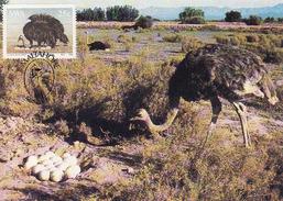 South Africa, Maximum Card 1985, The Ostrich, Strauss, Volstruis, Mint, Maltahohe - Afrique Du Sud (1961-...)