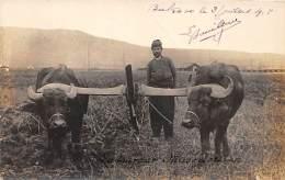 MACEDOINE - BUKOVO - Photo Card - Laboureur - Bovins / Bovids - Macédoine