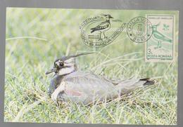 ROMANIA  MAXI CARD--BIRDS OF  DANUB- DELTA- - Birds