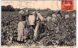 CORREZE -  3- SCENES DE VENDANGES - Un Porteur Et Sa Hotte -   BE + 1916 - Non Classés