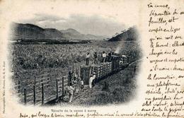 BRESIL - Récolte De La Canne à Sucre - Petit Train à Vapeur - Carte Peu Courante - - Brasilien