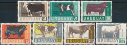 Uruguay  Koeien - Boerderij