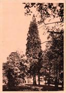 BELGIQUE - FORGES-CHIMAY - L'Abbaye N.D. De Scourmont -  Très Très Rare - Carte Postée - Chimay