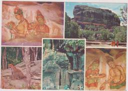 ASIE,ASIA,SRI LANKA ,CEYLON,ceylan,KANDY,jungle - Sri Lanka (Ceylon)