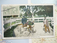 Harness Florida Ostrich Farm Jacksonville - Jacksonville