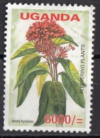 1856 Uganda 2005 Fiori Flowers Asteraceae Compositae  Flowering Plants Used Viaggiato - Vegetazione