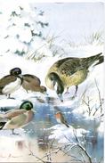 Fantasie - Vogel - Roodborstje - Oiseau - Rougegorge - Bird - Robin Redbreast - Unclassified