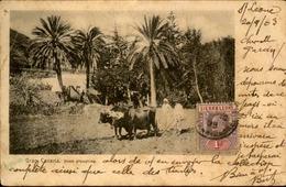 SIERRA LEONE - Carte Postale , Scène D 'agriculture , En 1903 Pour L 'Algérie - A Voir - L 6142 - Sierra Leone