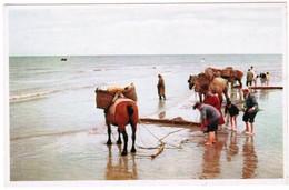 Garnaalvissers, Paardevissers, Pêcheurs De Crevettes (pk32462) - Pêche