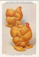 KBIN / IRSNB - Ca 1950 - Pluimvee, Oiseaux De Basse-cour, Poultry, Chicken (perfect Condition) - 12 - Oiseaux