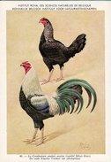 KBIN / IRSNB - Ca 1950 - Pluimvee, Oiseaux De Basse-cour, Poultry, Chicken (perfect Condition) - 40 - Oiseaux