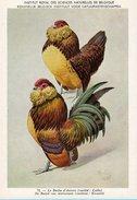 KBIN / IRSNB - Ca 1950 - Pluimvee, Oiseaux De Basse-cour, Poultry, Chicken (perfect Condition) - 72 - Oiseaux