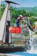 Japan Dauphin Delfin - Delfini