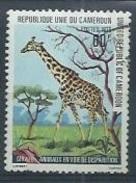 """CAMEROUN :Girafe """" Animal En Voie De Disparition """""""