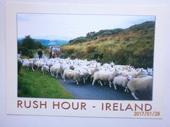 Postcard Rush Hour Ireland  Sheep Tractor Farmer My Ref B2166 - Other