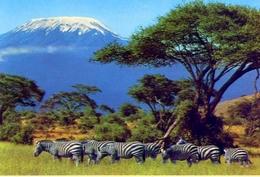 Grant's Zebra - Africa - Formato Grande Non Viaggiata - E - Sudan
