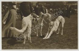 (Chiens) Barzoï. Carte Photo. - Dogs