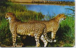 NAMIBIA  PHONECARD (CHIP) CHEETAH -NAM 09-USED(bx1)