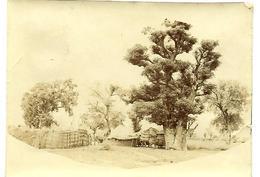 "NIGER - ""village Et Gros Arbre"", Photo Originale - Africa"