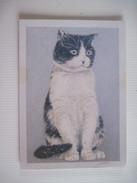 """CPM Laurence David - """"Agatha"""" Le Chat T.B.E. 18 X 13 Cm - Peintures & Tableaux"""